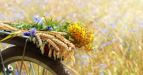 Pyörä ja kesäkukat